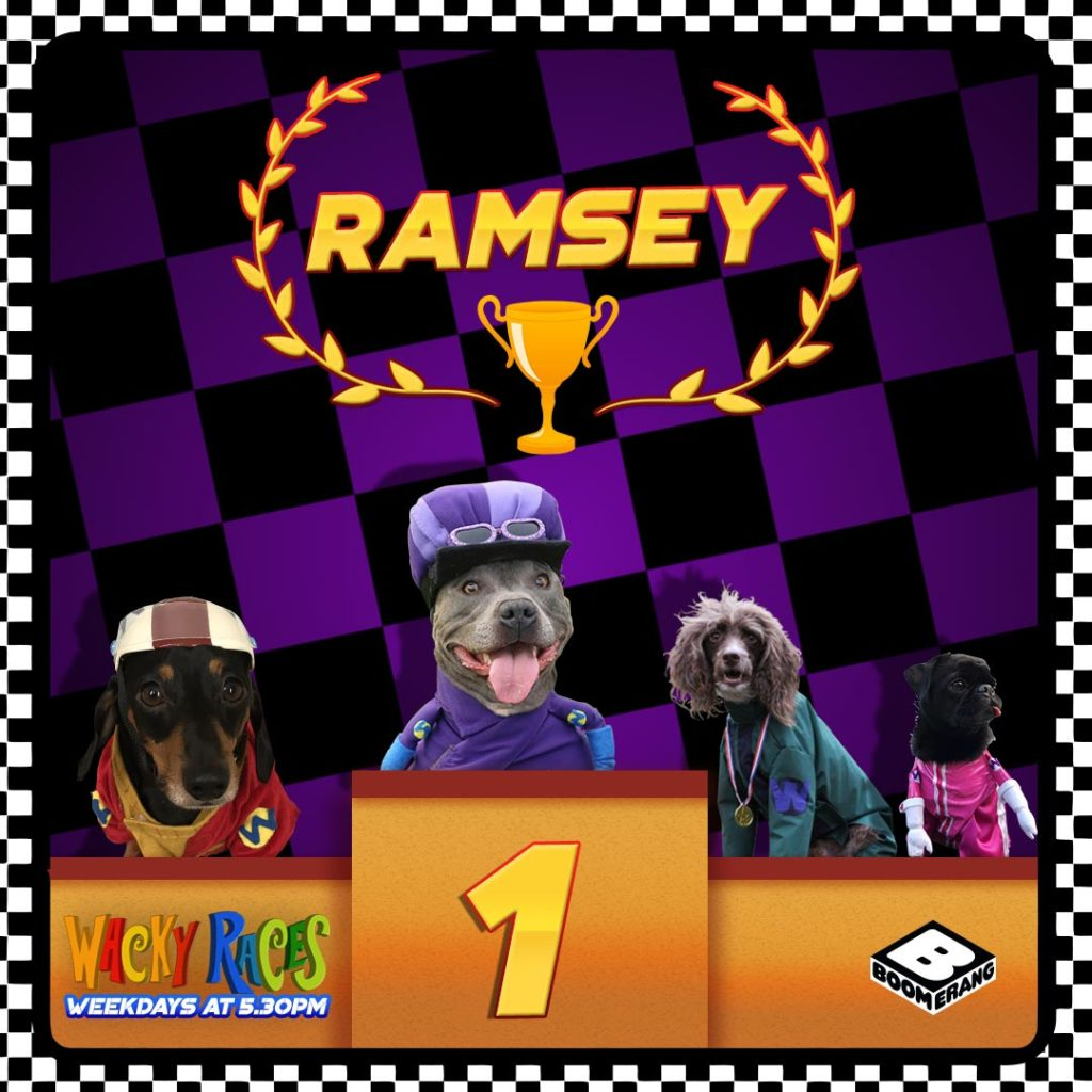 Boomerang UK Ramsey The Bull Terrier Wins Wacky Races Fast And The Furriest Competition